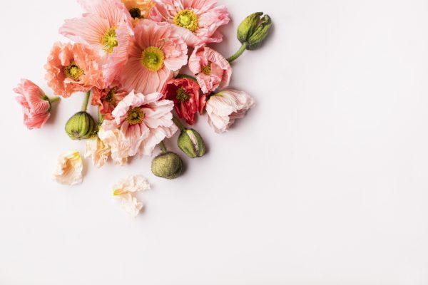 poppy blossums